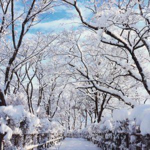 茂野誠一郎「冬晴れのもみじ園」