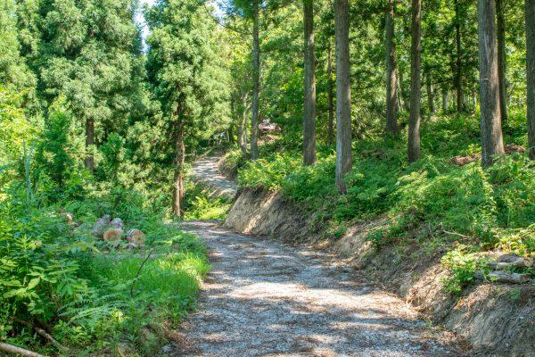 秋葉山神社への山道