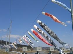 岩田鯉のぼり
