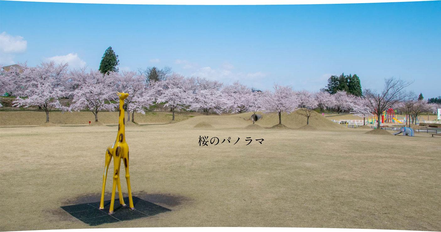 越路河川公園 桜のパノラマ