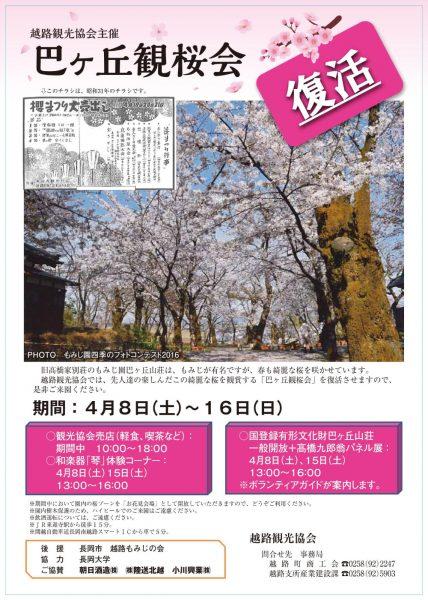 巴ヶ丘観桜会2017