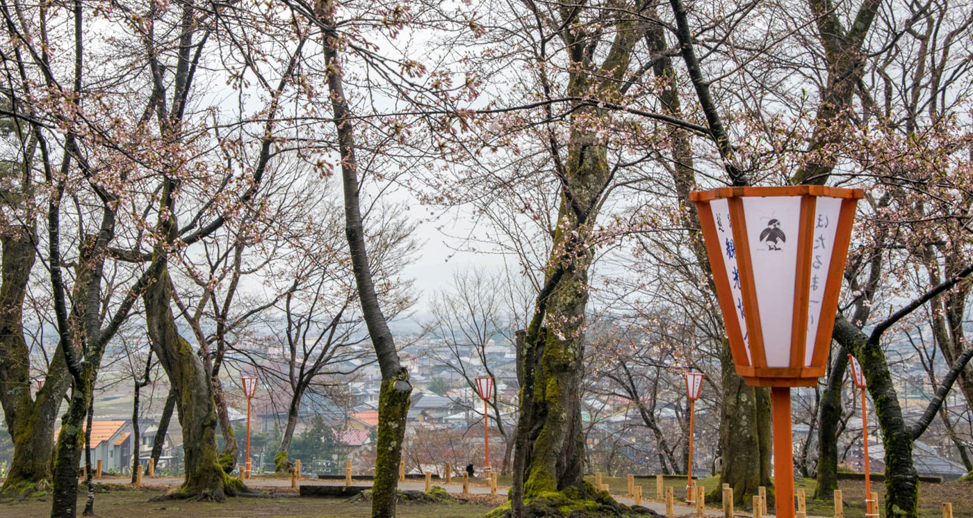 巴ヶ丘観桜会