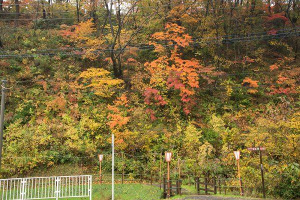 松籟閣の前の紅葉