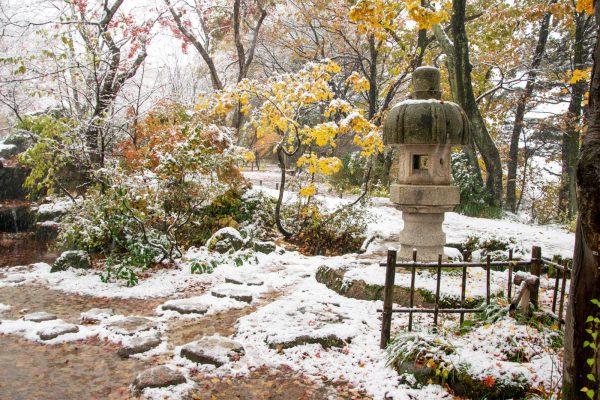 庭園 飛び石