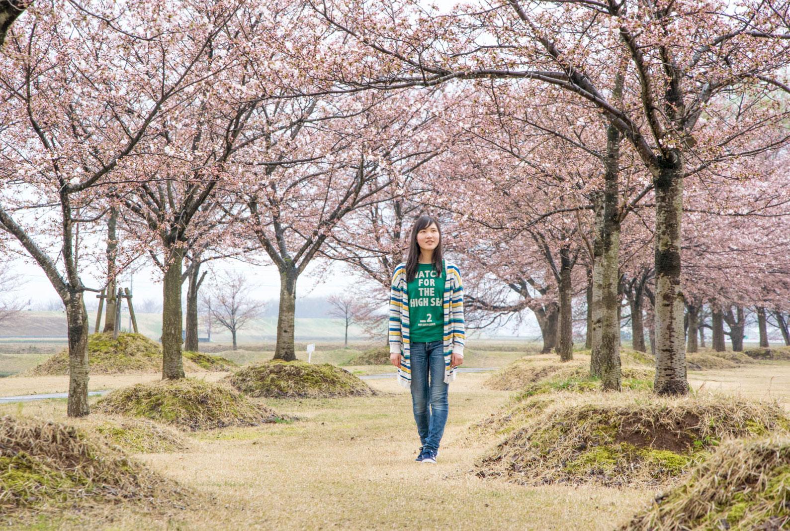越路河川公園 桜の並木道