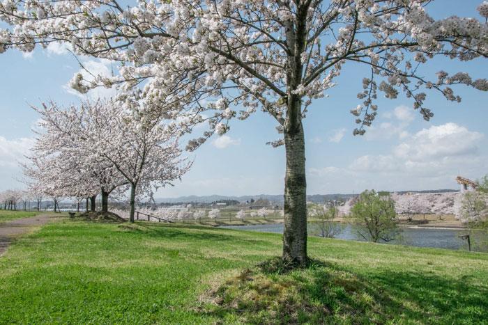 越路河川公園 池