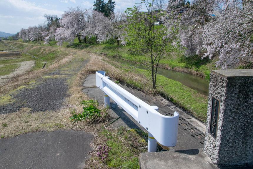 岩野の桜「さくらばし」