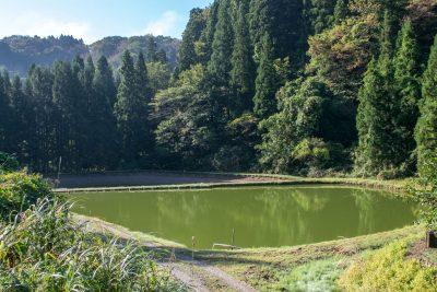 錦鯉の養殖場